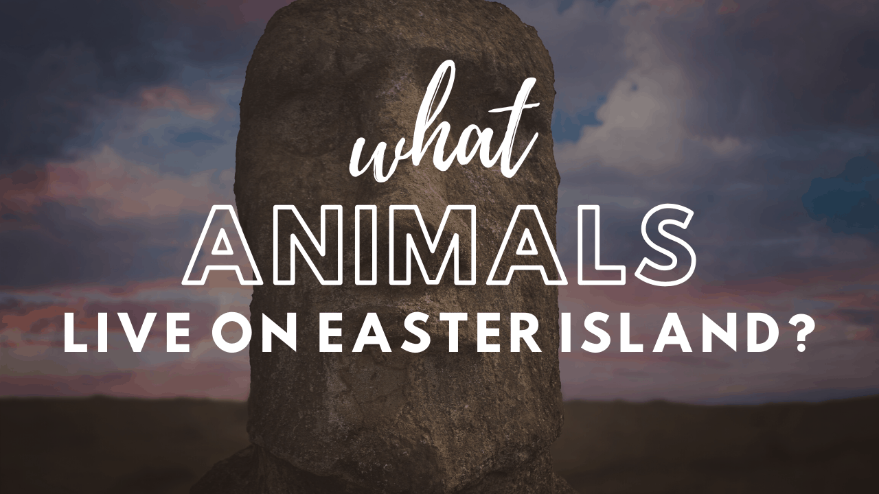 animals on easter island