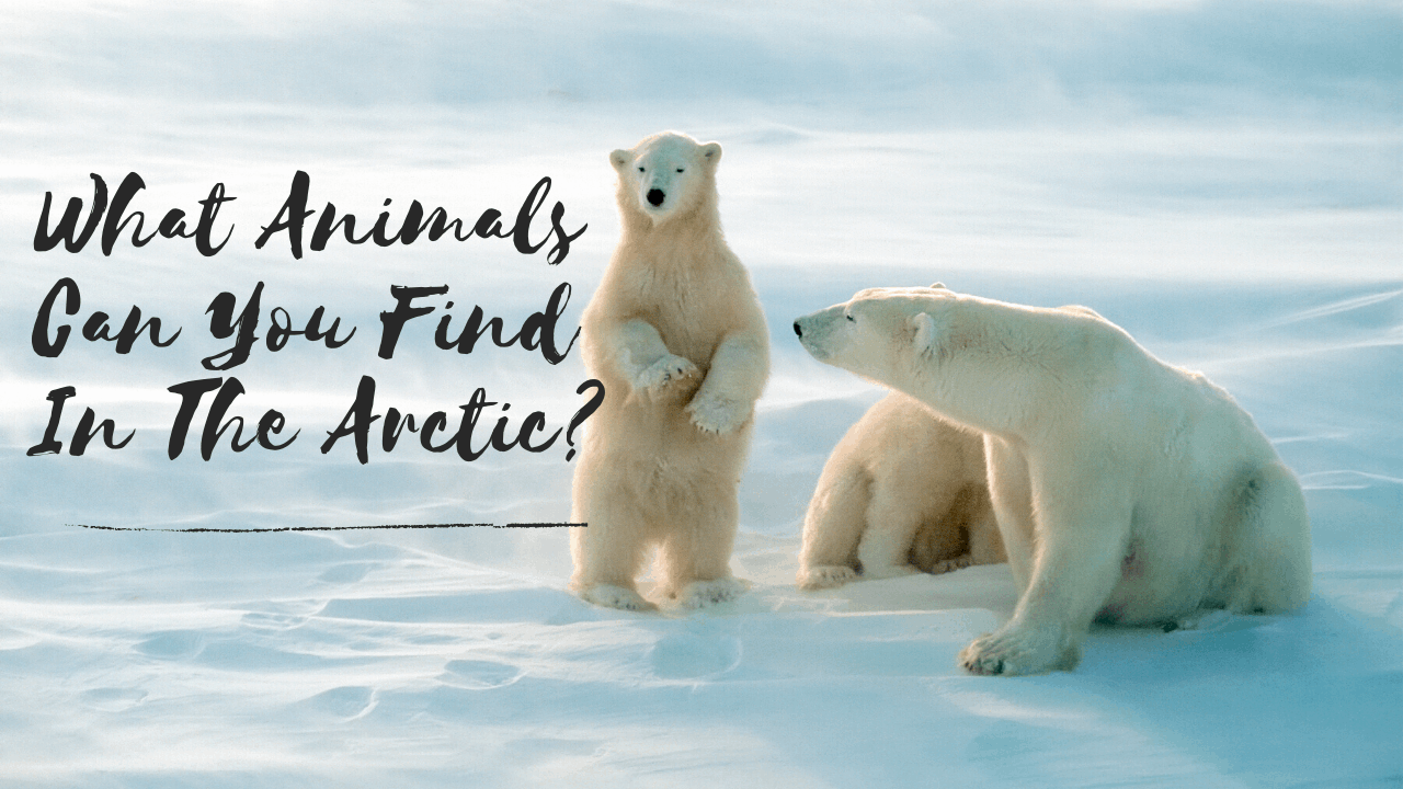 animals that exist in the arctic