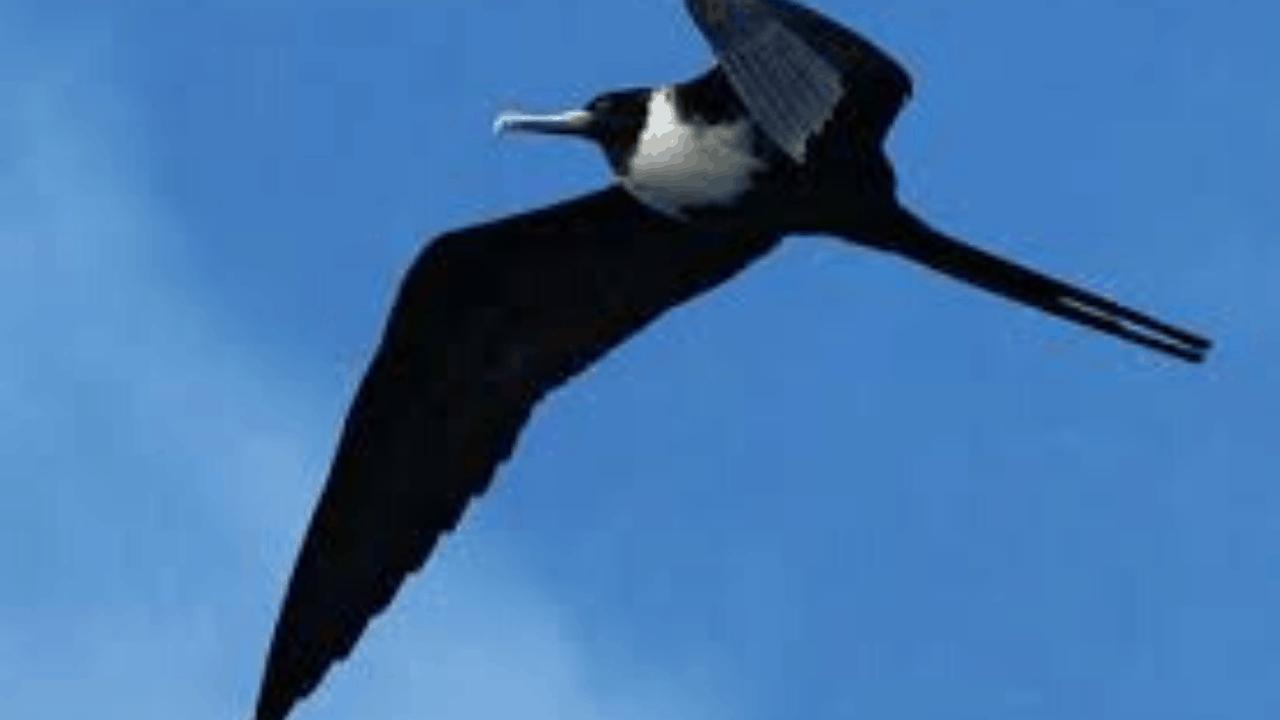 birds easter island