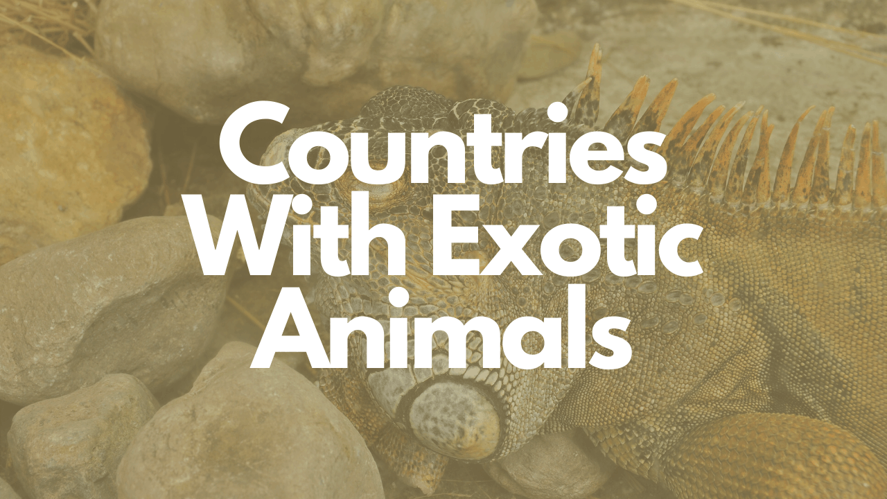 countries with exotic animals