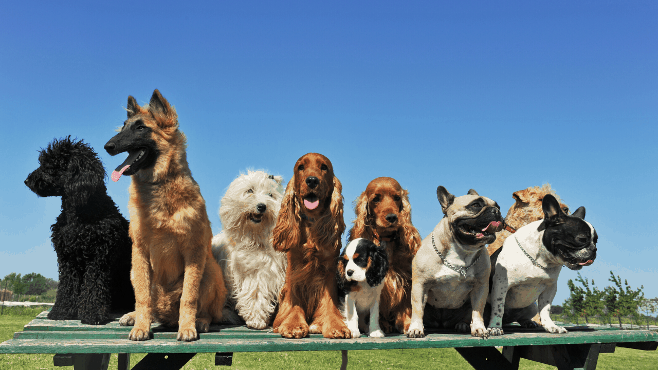 uk's most popular dogs
